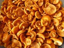 Nameko Mushrooms Royalty Free Stock Image