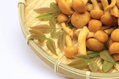 Nameko mushrooms in the bamboo basket Stock Photography