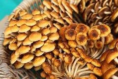 Nameko Mushrooms Royalty Free Stock Images