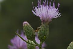 Nameless flower Stock Images
