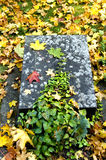 Nameless grave. Small old gravestone on a autumn ground. With space for copy royalty free stock image
