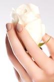 Namen de schoonheids gevoelige handen met de bloem van de manicureholding geïsoleerd toe Stock Fotografie