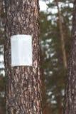 Nameplate na drzewie zdjęcie stock