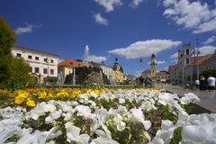 Namestie SNP square at Banska Bystrica. With white pansy flowers Stock Image