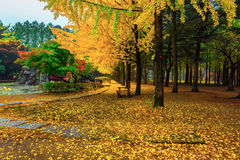 Nami island in autumn royalty free stock photos