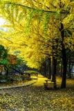 Nami island in autumn. Of Korea Stock Image