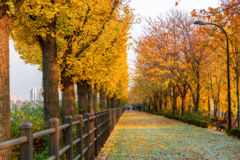 Nami island in autumn. Of Korea Stock Photo