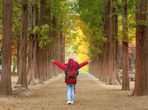 Nami Island in Autumn South Korea immagini stock libere da diritti
