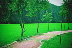 Nami Island Grass Field Stockfotos