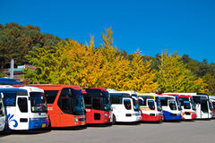 Bus row at Nami Island. NAMI ISLAND, KOREA - OCT 18: Row of tourist bus waiting at parking lot with colorful tree during autumn season at Seoraksan, South Korea Royalty Free Stock Images