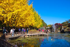 Nami Island autumn scenery Royalty Free Stock Photos