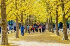 NAMI ISLAND,KOREA - OCT 25: Tourists taking photos. Stock Photo