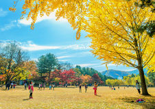 NAMI ISLAND,KOREA - OCT 25: Tourists taking photos. NAMI ISLAND,KOREA - OCT 25: Tourists taking photos of the beautiful scenery in autumn around Nami Island Stock Photography