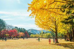 NAMI ISLAND,KOREA - OCT 25: Tourists taking photos. NAMI ISLAND,KOREA - OCT 25: Tourists taking photos of the beautiful scenery in autumn around Nami Island Royalty Free Stock Images