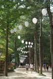 Nami Island royalty free stock images
