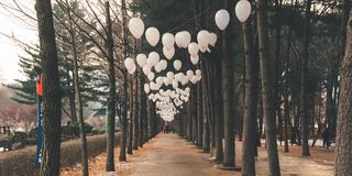 Nami Island Walkway Park stock images