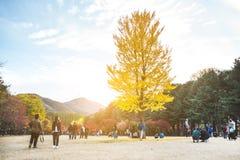 NAMI wyspa KOREA, OCT, - 28: Turyści bierze fotografie w jesieni a Obrazy Royalty Free