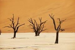 Namib沙漠风景在Deadvlei的 免版税库存照片