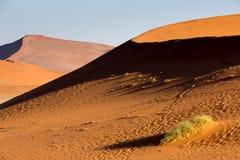 Namib öken, Sossusvlei på solnedgången Royaltyfria Foton