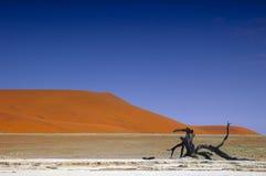 namib Намибия пустыни Стоковые Фотографии RF