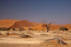 namib пустыни Стоковые Фотографии RF