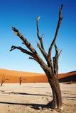 namib пустыни Стоковое фото RF