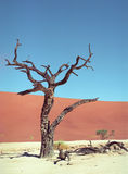 namib пустыни Стоковое Изображение RF