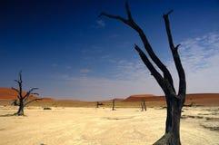 namib пустыни deadvlei Стоковые Фотографии RF