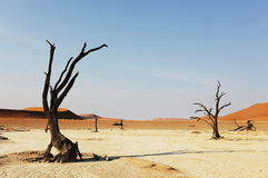 Namib Royalty Free Stock Images