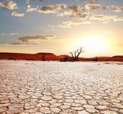 Namib Foto de archivo libre de regalías