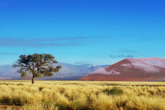 Дюны пустыни Namib, Намибии, Африки Стоковые Фотографии RF