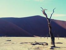 Namib royalty free stock image