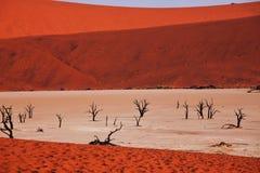 Namib Royalty Free Stock Photography
