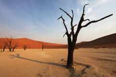 Namib Royalty Free Stock Photos