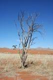 Namib Desert. Dry tree in Namib desert, picture taken in Namibia Stock Photo