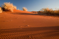Namib desert. Scenic view of rippled sand dunes and bushes in Namib desert, Sossusvlei, Namibia Royalty Free Stock Photo