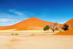 Namib Desert Stock Photography