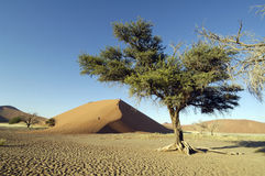 The Namib desert Stock Photo