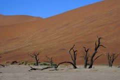 Namib Desert. Dead trees in the Namib Desert Royalty Free Stock Photography
