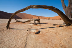 Namib desert. Arch made of dry acacia trunk in Namib desert. Red sand dunes in background stock images