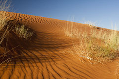 Namib Desert Royalty Free Stock Photos