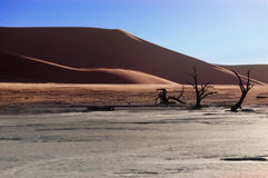 Namib desert. View of Dead Vlei, Namib desert, Sosussvlei, Namibia, South Africa Royalty Free Stock Image