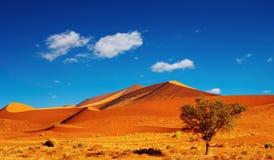 Namib Desert Stock Image