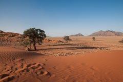 namib desert Zdjęcie Stock