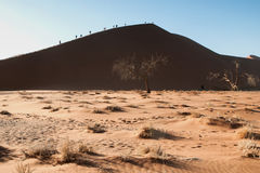 namib desert Obrazy Royalty Free