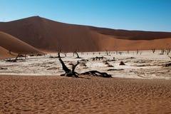 namib desert Obraz Royalty Free