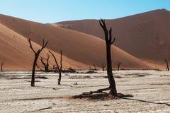 namib desert Obrazy Stock