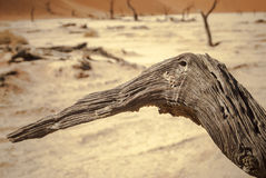 The Namib desert Stock Photo