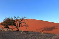 Namib desert with the Deadvlei and Sossusvlei in Namibia. The Namib desert with the Deadvlei and Sossusvlei in Namibia Royalty Free Stock Images