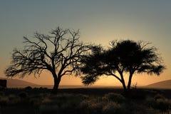 Namib desert with the Deadvlei and Sossusvlei in Namibia. The Namib desert with the Deadvlei and Sossusvlei in Namibia Royalty Free Stock Photo